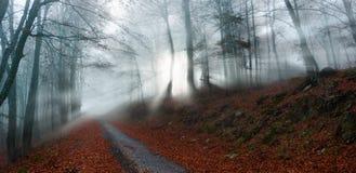 Sunrays i skogen arkivfoto