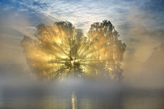 Sunrays. That illuminates some trees on an island in a lake Stock Photo