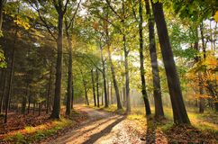 Sunrays of light in autumn forest with path and trees with colourful leaves. Stock Images