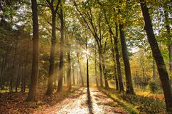 Sunrays of light in autumn forest with path and trees with colourful leaves. Sunrays of light in autumn forest with path and trees with colourful leaves in royalty free stock image