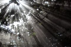 Sunrays. In a misty forest royalty free stock photography