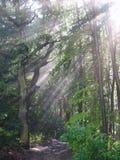 Sunrays in Misty Oak Forest, Wurm River Valley, Germany Royalty Free Stock Photo