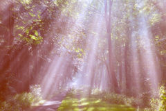 Sunrays Royalty Free Stock Photography