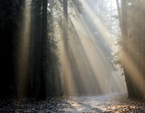 Sunrays in November forest Stock Photos