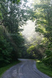 Sunrays over a dirt road. Sunlight shining through the forest over a dirt road stock photo