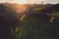 Sunrays over the field on sunset royalty free stock photos