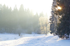 Sunrays over fog on river in winter forest Stock Photos