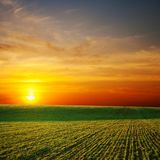Sunrays over green field Stock Photography