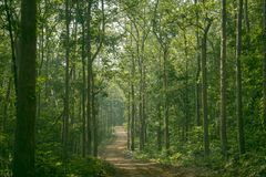 DEEP FOREST OF SOUTH INDIA stock photo