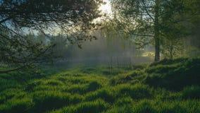 Sunrays przy lasem zdjęcie wideo