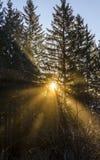 Sunrays que brillan a través de árboles Imagen de archivo libre de regalías