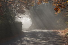 Sunrays on the road Stock Photography