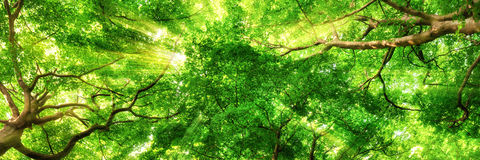 Sunrays shining through high treetops Royalty Free Stock Images