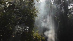Sunrays and smoke Stock Image