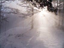 Sunrays through snow flurry. Sun shines through snowfall in the winter forest Stock Photos