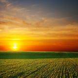 Sunrays sobre o campo verde fotografia de stock