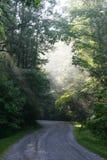 Sunrays sobre un camino de tierra Foto de archivo