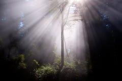 Sunrays a través de árboles Foto de archivo libre de regalías