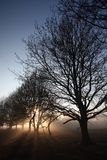 Sunrays a través de ramificaciones de árbol Imagenes de archivo