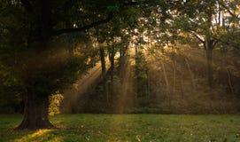 Sunrays through the trees in autumn stock image