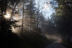 Sunrays and trees Royalty Free Stock Image