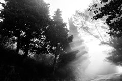 Sunrays and trees Royalty Free Stock Photo