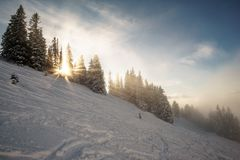 Sunrays between trees in snow winter wonderland. With lots of traces from skiing stock image