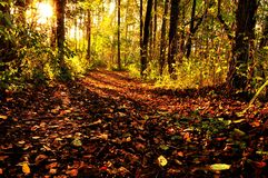 Sunrays through trees. A sunny walk through a forest, during autumn with lovely brown colors Stock Photography