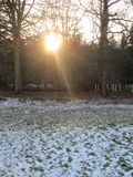 Sunrays Between Trees Royalty Free Stock Photography