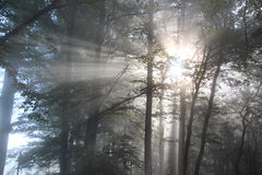 Sunrays in the wood Stock Image