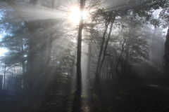 Sunrays in the wood Royalty Free Stock Photo