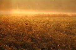 Sunrice Стоковые Изображения