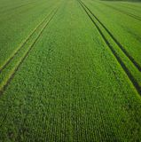 Green field in the morning royalty free stock images