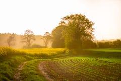 Sunrice sobre un campo amarillo fotografía de archivo