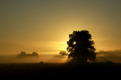 Sunrise 1. Beautiful september morning with fog in Holland royalty free stock photo
