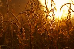 Sunrise. The sunrise of on the meadow about the hour 6:00 a.m Royalty Free Stock Images