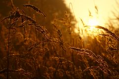 Sunrise. The sunrise of on the meadow about the hour 6:00 a.m Stock Images