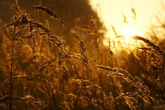 Sunrise. The sunrise of on the meadow about the hour 6:00 a.m Royalty Free Stock Photos