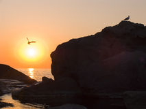 Sunrise. On the sea. In the sky the seagull soars. In the sea fishing boats Stock Image