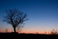 Sunrise. A tree in the blue hour Royalty Free Stock Photo