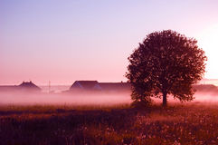 Sunrise. Picture of sunrise in summer rural Stock Photo