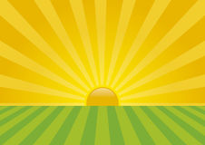 Sunrise. Vector sunrise on the fields. Summer sunny day Stock Photography