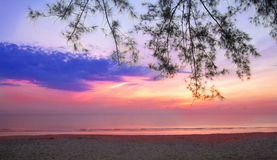 Sunrise. First sign of sunrise w branches hanging down taken from the beach Royalty Free Stock Photos