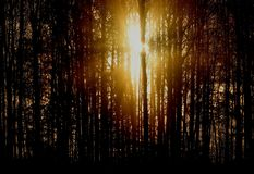 Sunrise. An early morning sunrise in fall. The sun behind trees stock photography