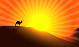 Sunrise. Camel in Desert. Arabian sunrise Stock Illustration