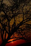 Sunrise. Sunset and tree silhoette at lamphun stock images