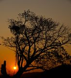 Sunrise. Sunset and tree silhoette at lamphun Royalty Free Stock Images