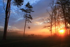 The morning sun Royalty Free Stock Images