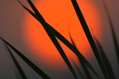 Sunrise. With grass in the foreground. Taken late August in MA, USA stock photos