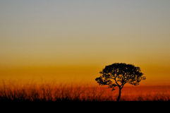 Sunrise. A sunrise and a tree royalty free stock image